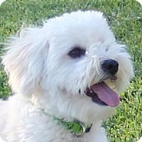 Adopt A Pet :: Reggie - La Costa, CA