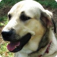 Adopt A Pet :: Ally - Kyle, TX