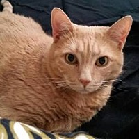 Adopt A Pet :: Peaches - New City, NY