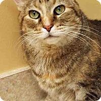 Adopt A Pet :: Misha - Hinsdale, IL