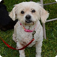 Adopt A Pet :: Shelby - Granbury, TX