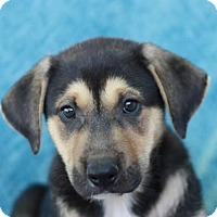 Adopt A Pet :: Jamal - ADOPTION IN PROGRESS - Brattleboro, VT