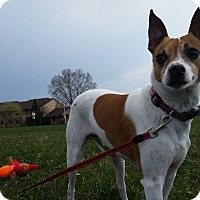 Adopt A Pet :: Buddy, Jr. - West Allis, WI