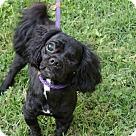 Adopt A Pet :: Riley