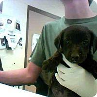 Adopt A Pet :: BABYLON - Conroe, TX