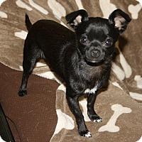 Adopt A Pet :: Summer - Edmonton, AB