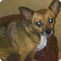 Adopt A Pet :: Katie - Providence, RI