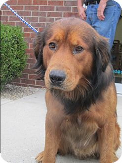 Australian Shepherd/Shepherd (Unknown Type) Mix Dog for adoption in Mount Sterling, Kentucky - Clyde