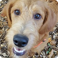 Adopt A Pet :: Molly - Alpharetta, GA
