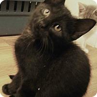 Adopt A Pet :: Renoir - Cleveland, OH