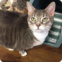 Adopt A Pet :: Linksy - Greensburg, PA
