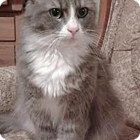 Adopt A Pet :: Prudence - Attalla, AL