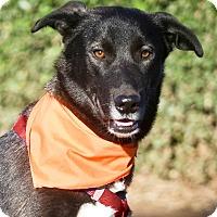 Adopt A Pet :: Houdini gal fun smart - Sacramento, CA