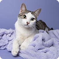Adopt A Pet :: Lottie - Wilmington, DE