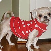 Adopt A Pet :: Angela - Mooy, AL