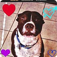 Adopt A Pet :: Eli - Scottsdale, AZ