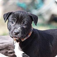 Adopt A Pet :: Hannah Teter - Austin, TX
