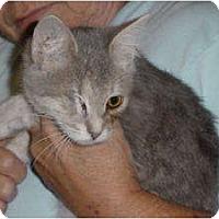 Adopt A Pet :: Odie - McDonough, GA
