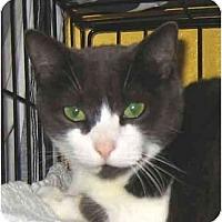 Adopt A Pet :: Wilma - Plainville, MA