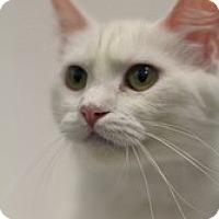 Adopt A Pet :: Hostess - Sacramento, CA