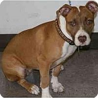 Adopt A Pet :: Sadie - DFW, TX