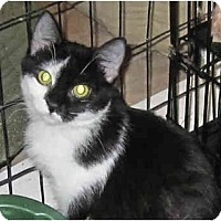 Adopt A Pet :: Patches - Catasauqua, PA
