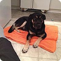 Adopt A Pet :: Tryggvy - Saskatoon, SK