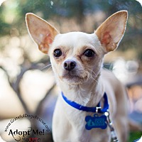 Adopt A Pet :: Tika - San Francisco, CA