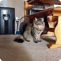 Adopt A Pet :: Teddy - San Ramon, CA