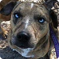 Adopt A Pet :: Tigger - Kingwood, TX
