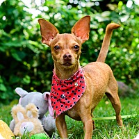 Adopt A Pet :: Buttercup - Calgary, AB