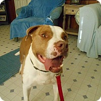 Adopt A Pet :: Big Boy Daddy-Adopted! - Kannapolis, NC