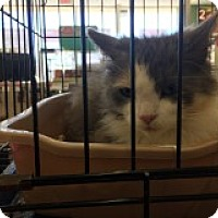 Adopt A Pet :: Crystalle - Manchester, CT