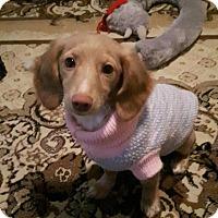 Adopt A Pet :: Tawny - Saskatoon, SK