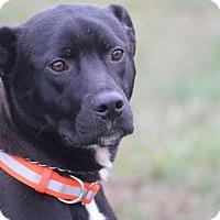 Adopt A Pet :: Alabama - Glastonbury, CT