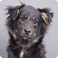 Adopt A Pet :: Rowdy - Sudbury, MA