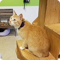Adopt A Pet :: Kanga - Chicago, IL