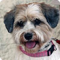 Adopt A Pet :: Roxy - Palmdale, CA