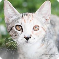 Adopt A Pet :: Poppy - Modesto, CA