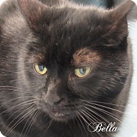 Adopt A Pet :: Bella - Jackson, NJ
