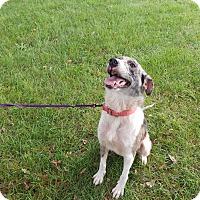 Adopt A Pet :: Elizabeth - Buffalo, IN