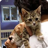 Adopt A Pet :: Cruiser - Port Clinton, OH