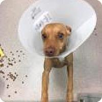 Adopt A Pet :: Rutledge 0252 - Columbus, GA
