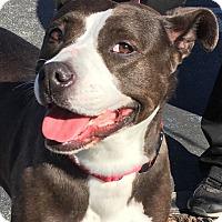 Adopt A Pet :: Pepper - Los Angeles, CA