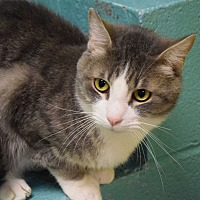 Adopt A Pet :: Squeekers - Pottsville, PA