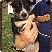Adopt A Pet :: Lotus - Alta Loma, CA