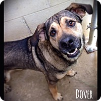 Adopt A Pet :: Dover - Hartford City, IN