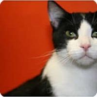 Adopt A Pet :: APOLLO - SILVER SPRING, MD