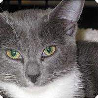 Adopt A Pet :: Graycee - Port Republic, MD