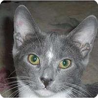 Adopt A Pet :: Casanova - Scottsdale, AZ